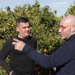 Compromís proposa que el Govern compense als citricultors mentre dilate la reclamació de la clàusula de salvaguarda