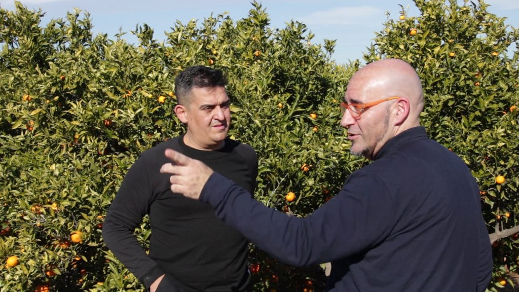 Les xifres oficials d'intercepcions d'organismes nocius en vegetals evidencien la incapacitat del Govern espanyol davant d'Europa