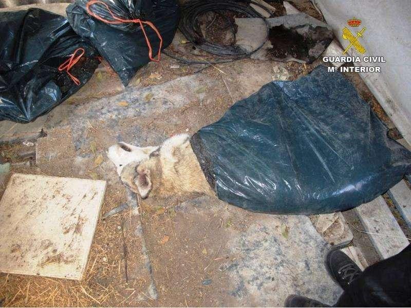 Investiguen a una protectora alacantina per possible maltractament d'animals