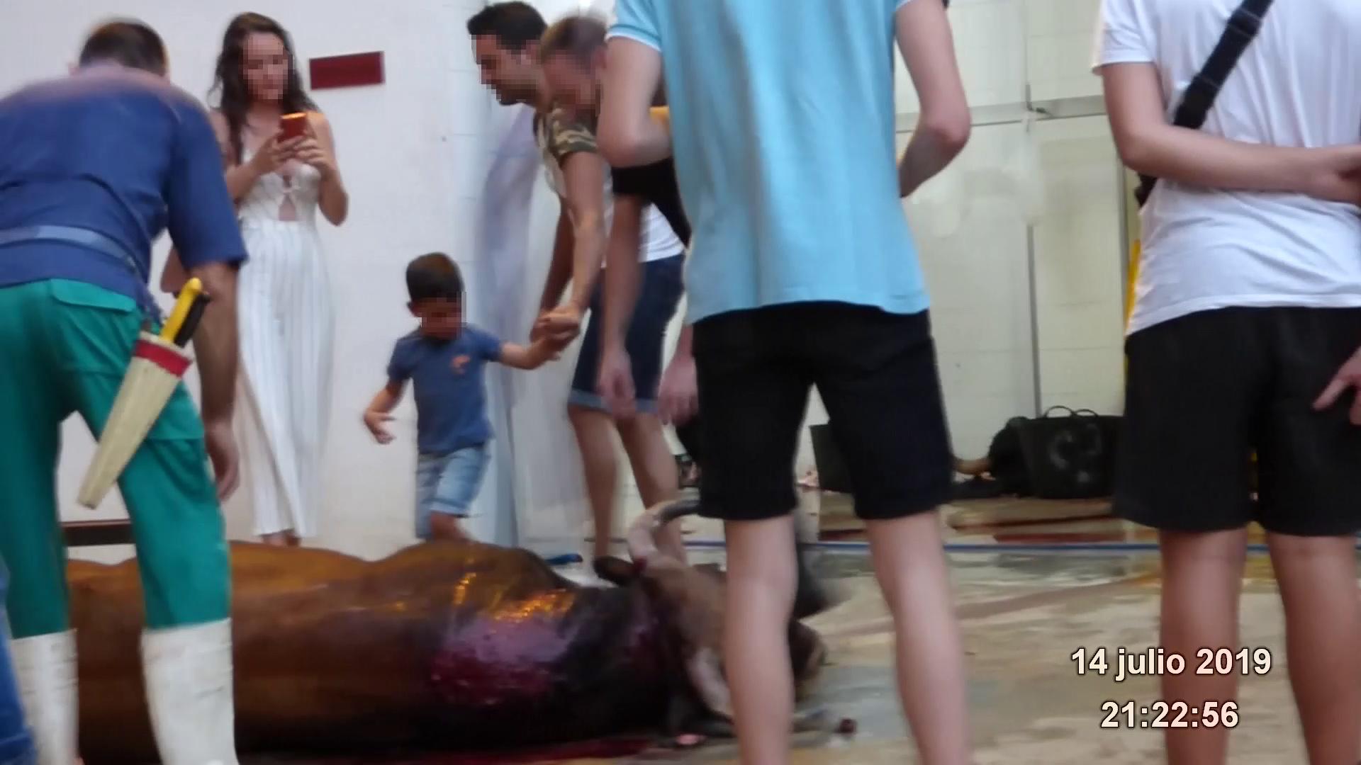 PACMA denuncia la desprotecció dels menors per la inacció de la conselleria d'Oltra