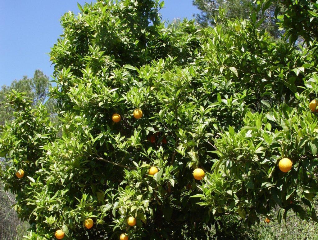"""Mulet: """"Els productors valencians es mereixen un Govern central còmplice amb la citricultura, cosa que no han tingut"""""""