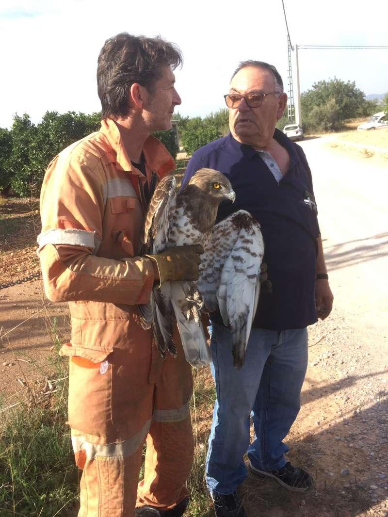 Rescaten a Llíria una àguila atrapada en una torre d'alta tensió