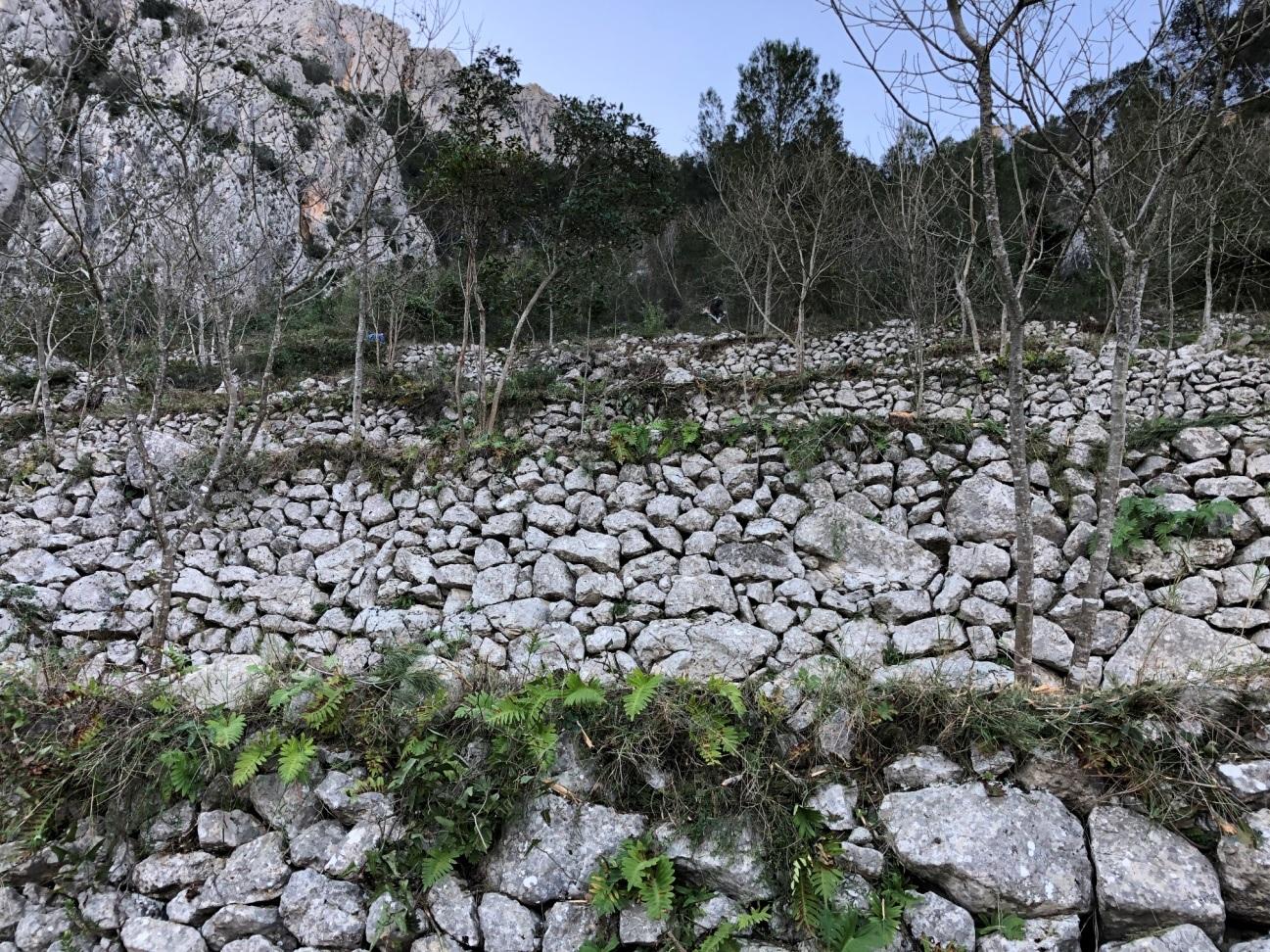 Arranca el projecte per a millorar la biodiversitat vegetal de l'Ombria de Benirrama