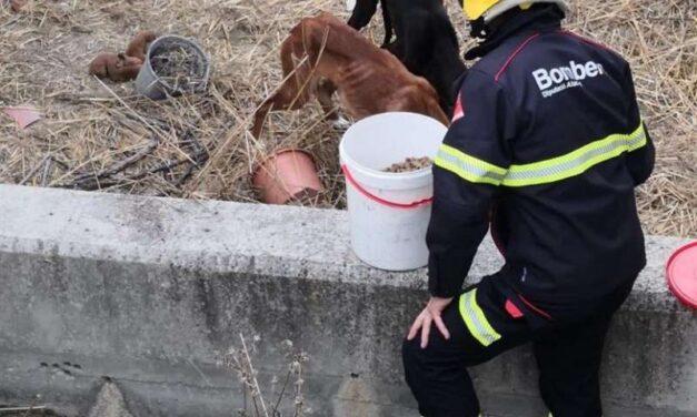 Rescatada una ventrada de quatre gossos caiguts per un terraplè a Cocentaina